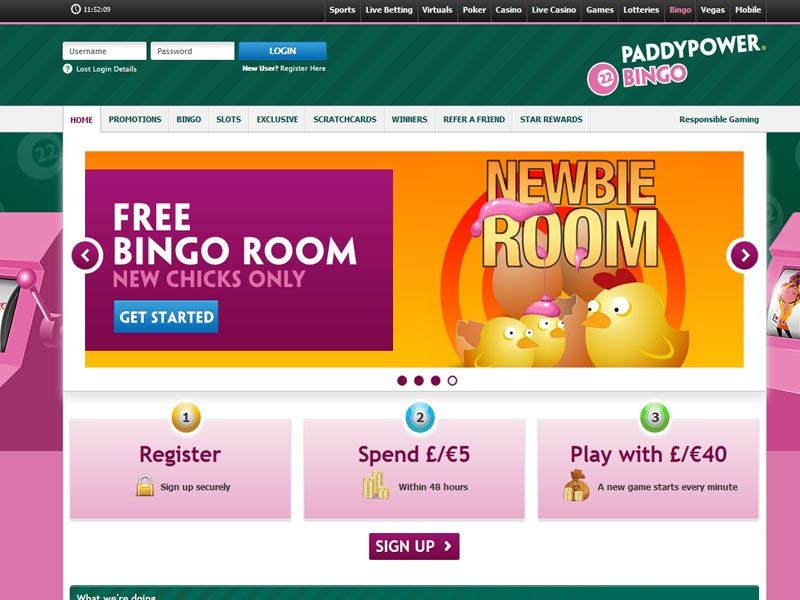 paddy-free-bingo offer