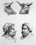 Animal to human evolution drawings - Boar