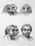 Animal to human evolution drawings - Owl