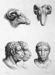 Animal to human evolution drawings - ram